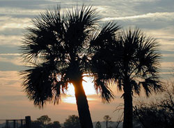 Palm trees in the sunset of Hilton Head